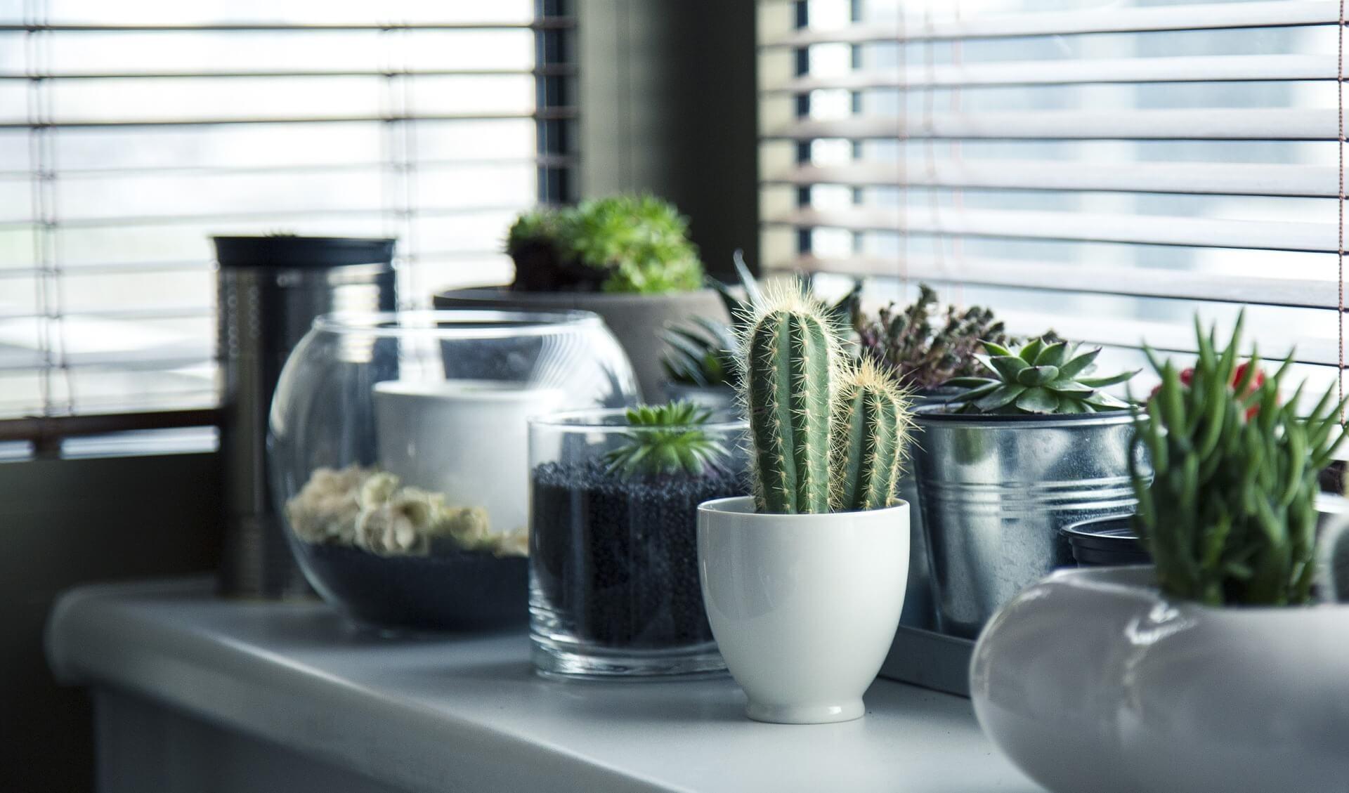 Ożyw swoje wnętrze, czyli jakie kwiaty doniczkowe wybrać do domu?