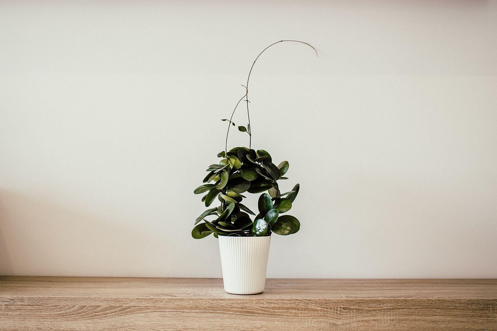 Rośliny oczyszczające powietrze w domu – naturalny filtr w Twoim mieszkaniu